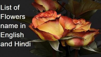 Photo of Flowers name in English and Hindi for class 1 to 10